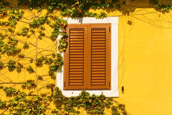 Comment faire pousser du lierre sur sa façade